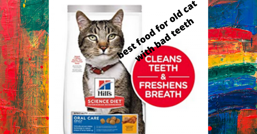 Bеѕt cat Food fоr Older Cаts with bad teeth